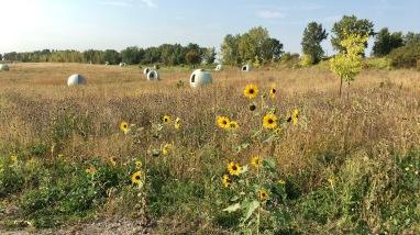 Herbes sèches au parc