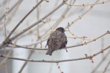 Birds in winter 1