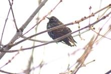 Birds in winter 2
