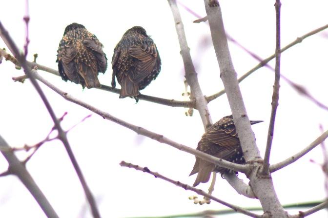 Birds in winter 4