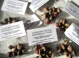Bags of semi-precious acorns (Quartz, Cornaline, Jasper, Hematite)
