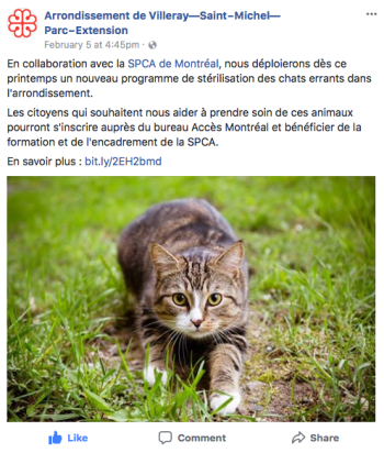FB-VSP-stérilisationChatsErrants