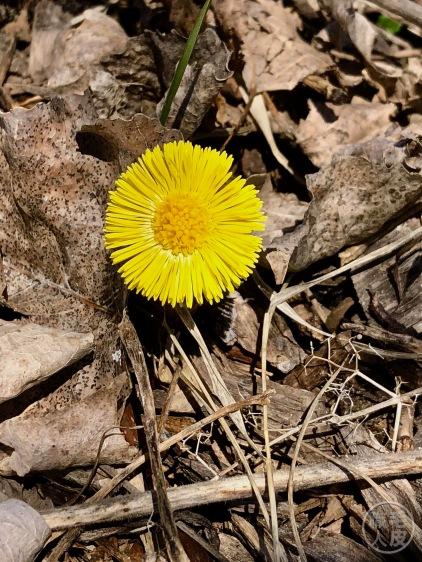 Fleur du printemps !