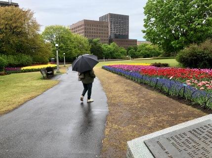 Tulips under the Rain