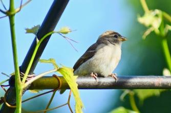 bird at the botanical garden