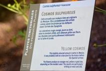 Descriptive sheet at Botanical garden / Fiche descriptive