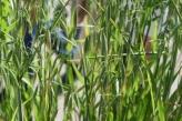 Grains: Avoine (#114)