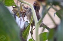 Bird eating sunflower's seed