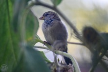 Bird in our garden