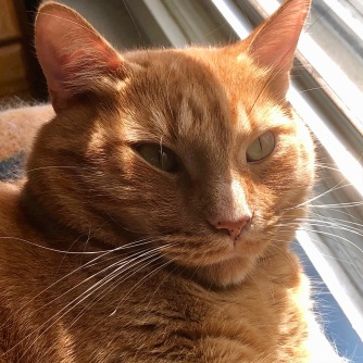 Caramel in the light (close-up)