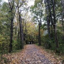 Mount Royal trail