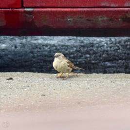 Bird / oiseau