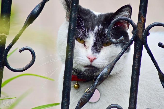 Friendly cat in Ottawa