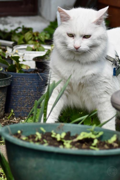 Vanille in the garden