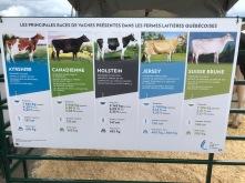 Infographique des vaches laitières