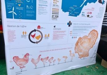 Infographique des poulets et dindons