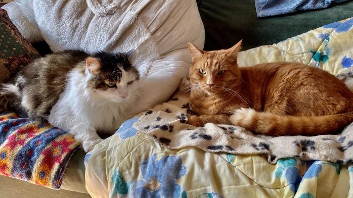 Saya et Caramel sur le divan
