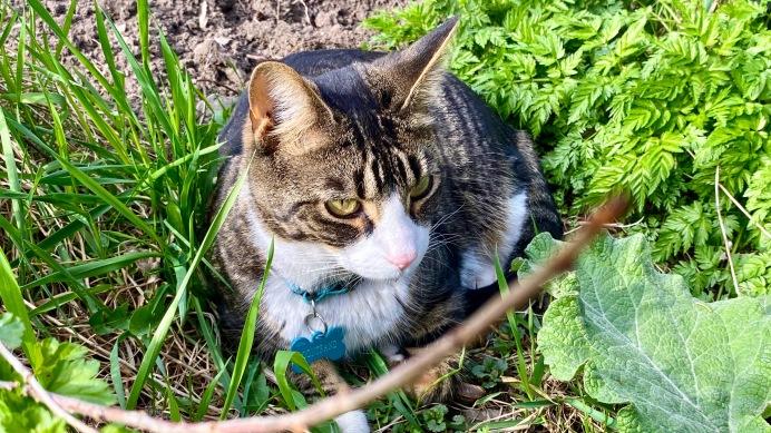Gontrand, friendly neighbourhood cat