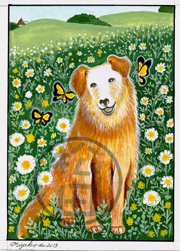 FlowerField-BrownDog-butterflies-LowResWM