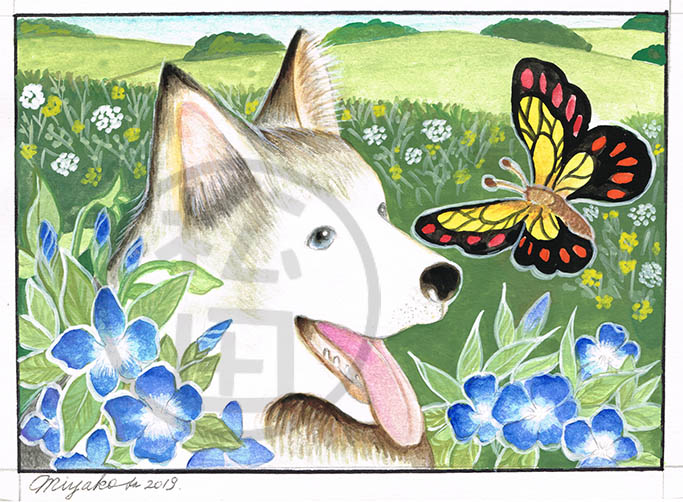 Periwinkle-husky-butterfly-LowResWM