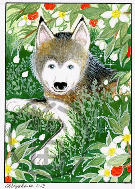 WildOrangeTree-Husky-LowResWM