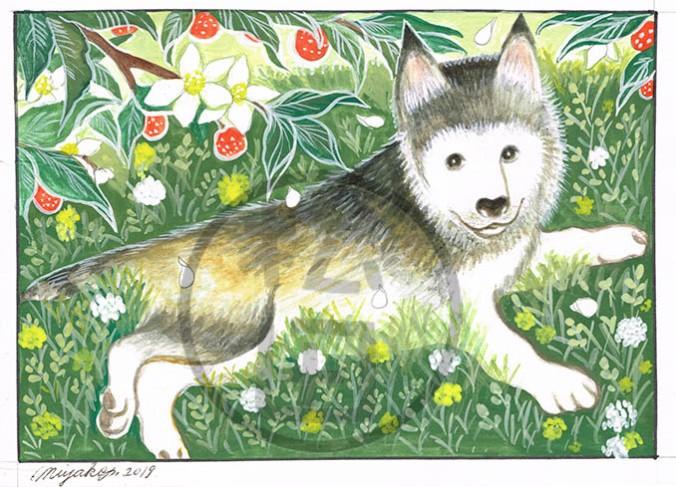 WildOrange-HuskyPuppy-LowResWM