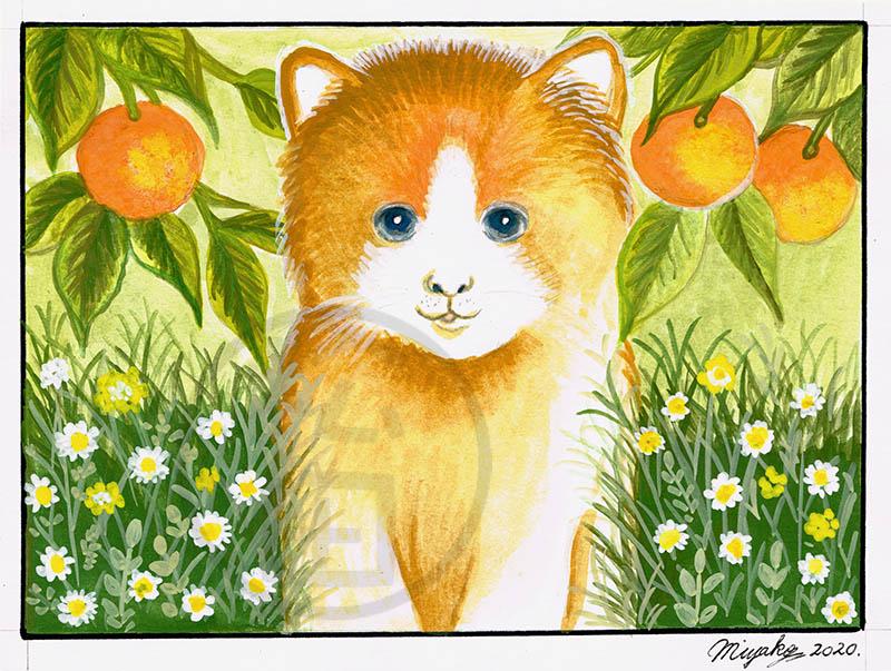 Clementine-OrangeTabbyCatLowResWM