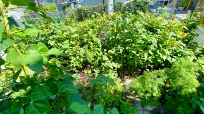 Sunflowers jungle (2021/07/31)